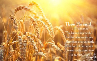 用愛撒下福音的種子